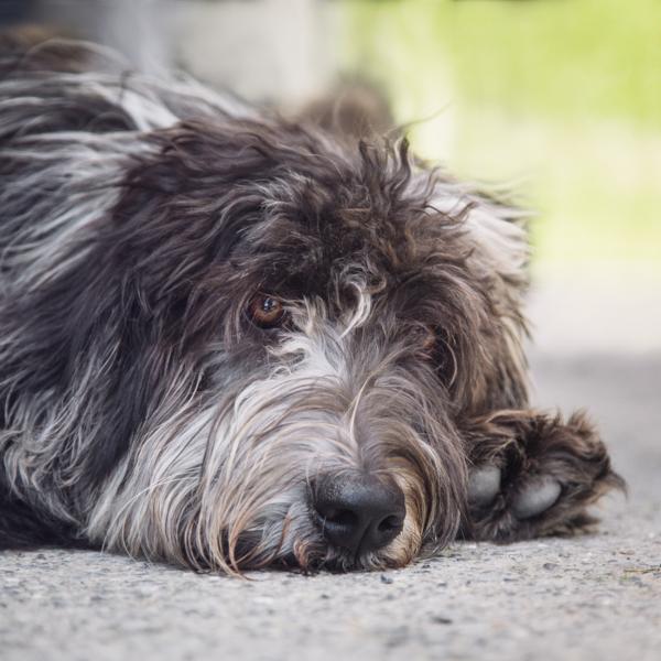 Social52.ch Pet Photography - Social52.ch Tiere Fotografie
